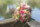 hochzeitsfotograf schweiz brautstrauss